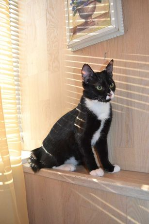 Черно-белый котенок 3 мес.,бархатная шубка,очень классная