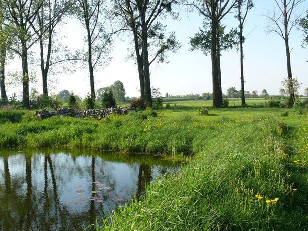 Działka rekreacyjna ze stawem hodowlanym (z możliwością zabudowy)