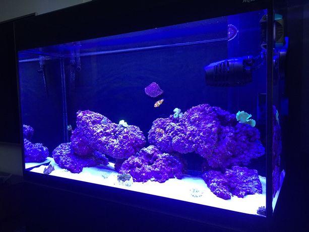 Akwarium morskie komplet na start
