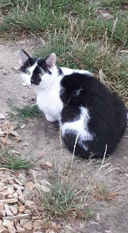 Kot na działkach na Zawodziu