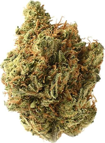 Nasiona marihuany Amnesia haze 5 szt