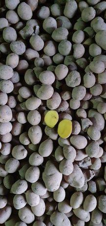 Ziemniaki Gala Odsort 10 gr/kg