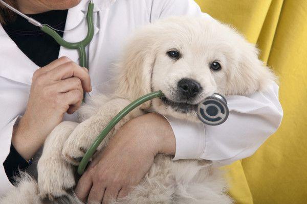 Пэтситтер, зооняня, кото-няня, собако-няня, ветеринар на дом