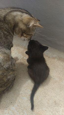 Da se gato com um mês de idade