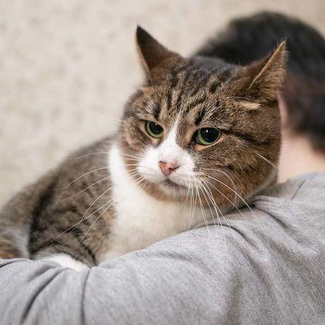 Кошка Мурочка в добрые руки