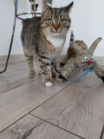 Zaginął kotek Hervi!