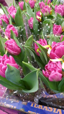 Тюльпан,гиацинт,крокус