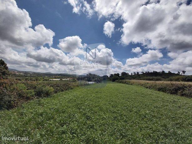 Terreno rústico a 500 metros da aldeia