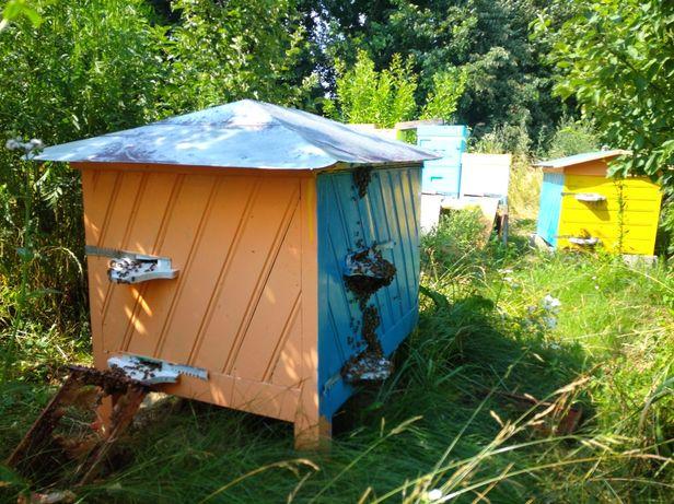 Ul Warszawski zwykły podwójny z pszczołami