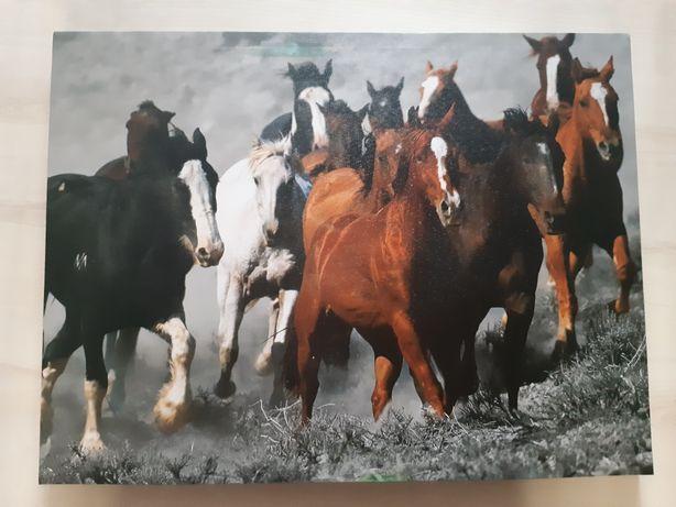 Obraz konie w biegu