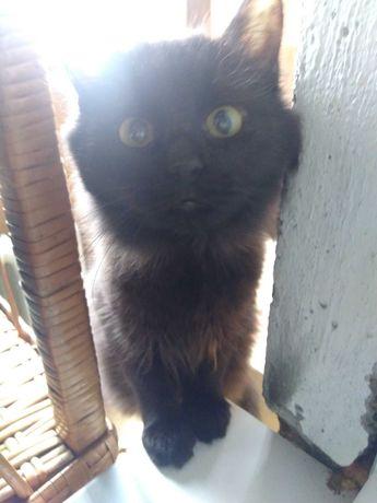 Черная ласковая кошечка ищет семью