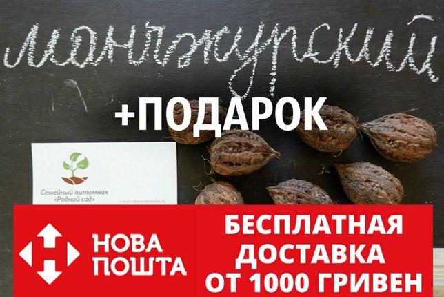 Манчжурский орех 10 штук семена для саженцев насіння горіх на саджанці