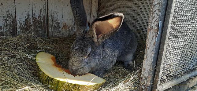 Продам парку кроликов