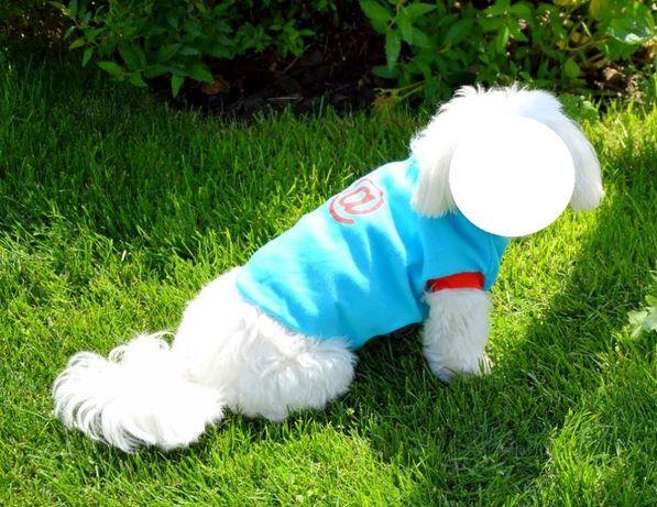 bluza dla psa, ubranko dla psa