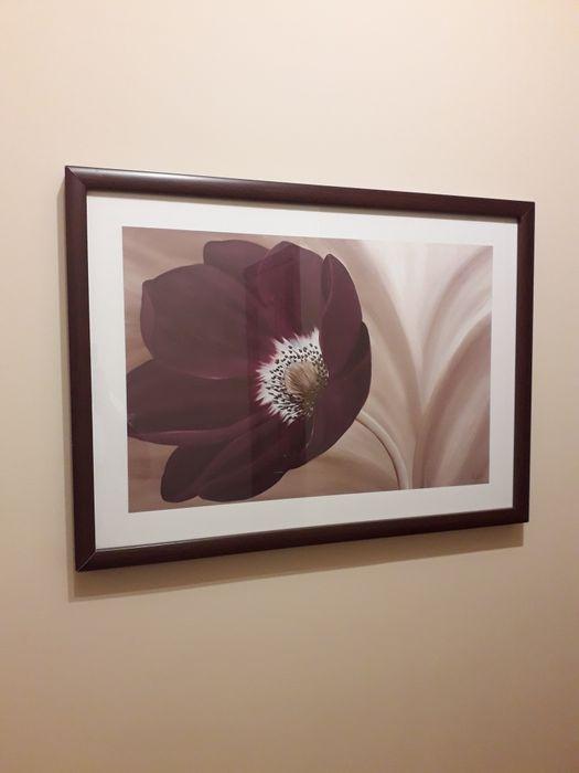 Obraz Velvet Anemone Oborniki - image 1