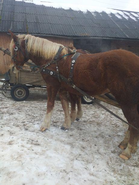 Продам коня кобилу лошицю