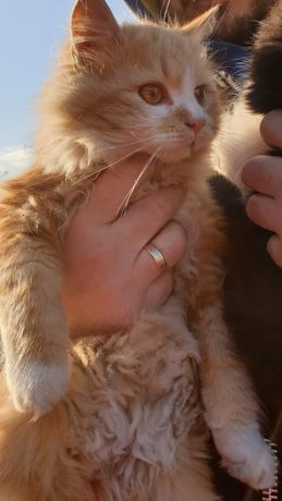 Кошенята в добрі руки.