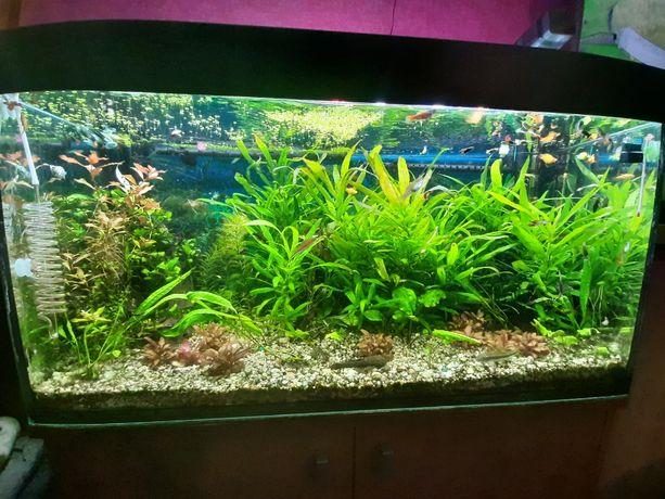 Akwarium z oświetleniem JUWEL szafka GRATIS