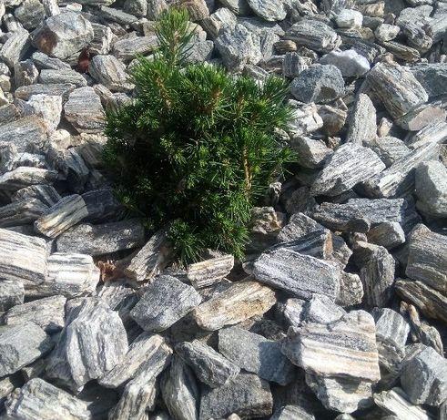Kora kamienna szara grys kamień naturalny pasiasty darmo DOSTAWA +głaz