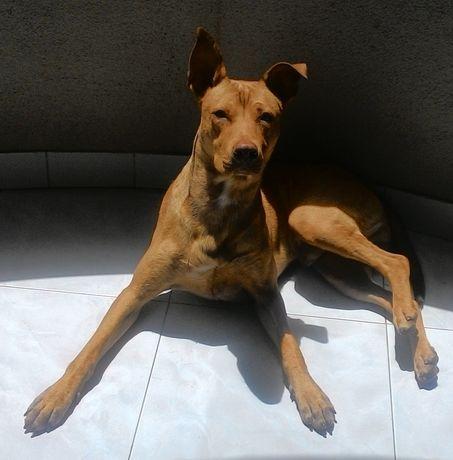 Adopção responsável cão