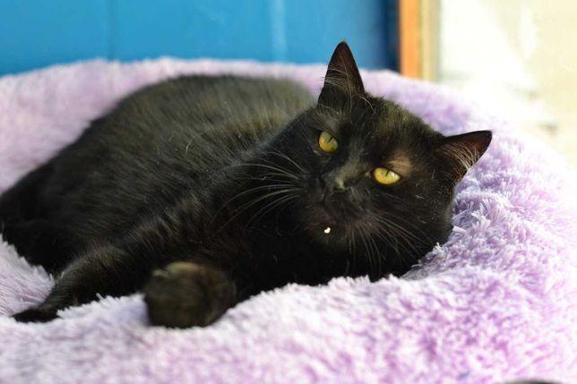 фігуриста чорна кішка 3р
