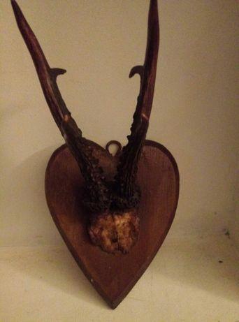 Poroże na  drewnianej podstawie serca polecam