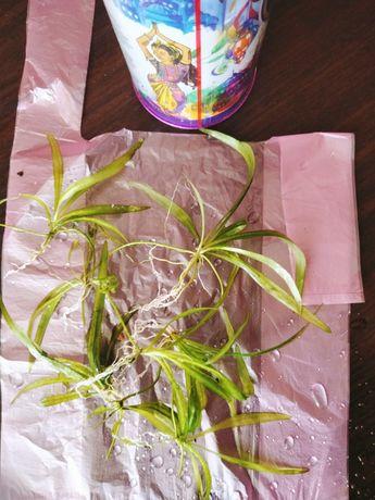Аквариумные растения в ассортименте