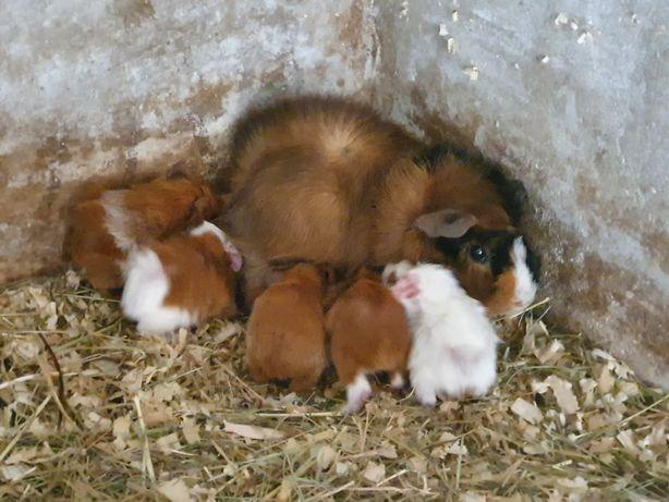 Pequenos animais