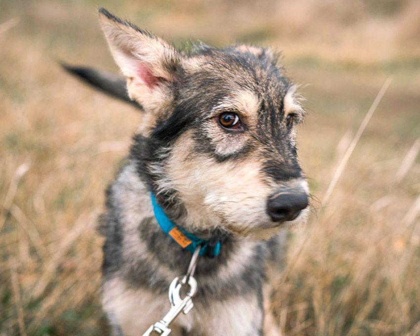 Красивые собачки 1 год, братик и сестричка - ищут добрых хозяев! Киев - изображение 1