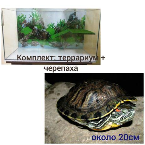 Комплект : черепаха красноухая около 20см + террариум. Доставка