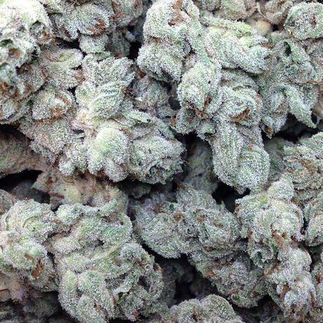 25sztuk Auto Afghan /Feminizowane Nasiona Marihuany