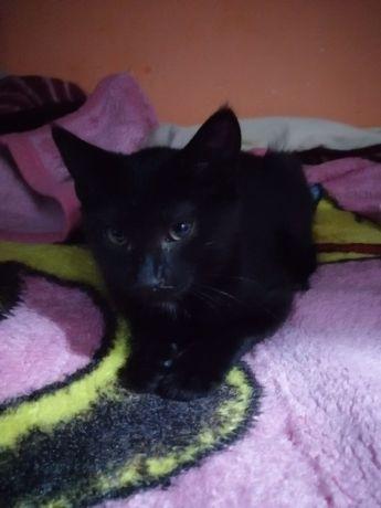 Котята, кошечки черная и полосатая/серая/рябая