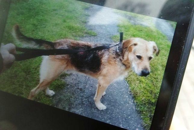 Oddam za darmo psa Marleya