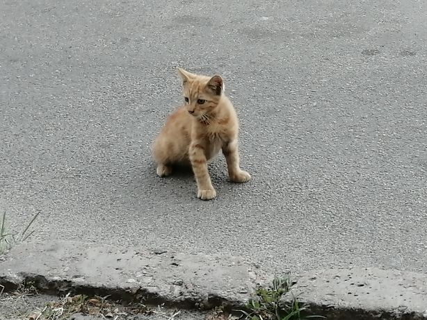 Котёнок мальчик рыжий