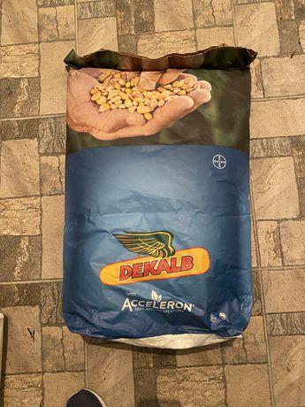 Семена Кукурузы DKC 3939