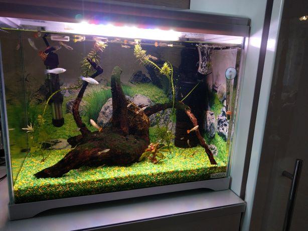 Akwarium kompletne z życiem 30l