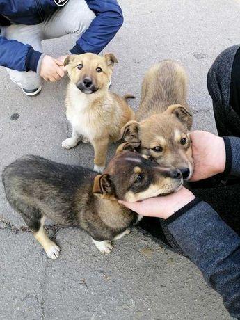 Маленькие игривые щенки в добрые руки