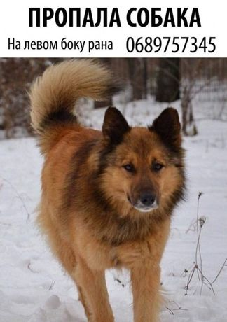 Печерск, потерялась собака 12.03.2018