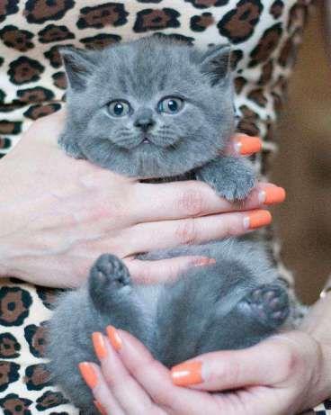 Шикарные плюшевые котята
