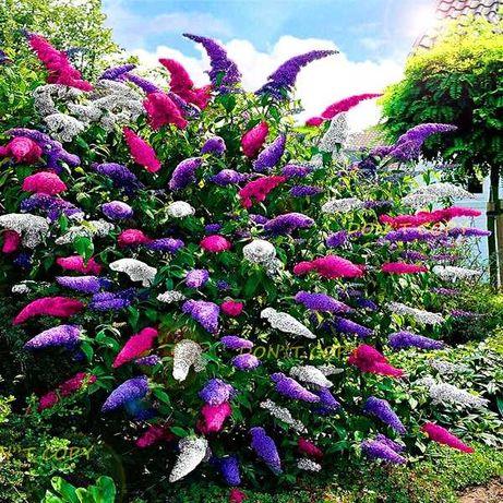 Krzewy ozdobne i byliny