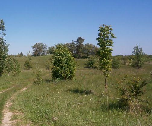 Продается земельный масив 8 га. Красивое местоположение на холме