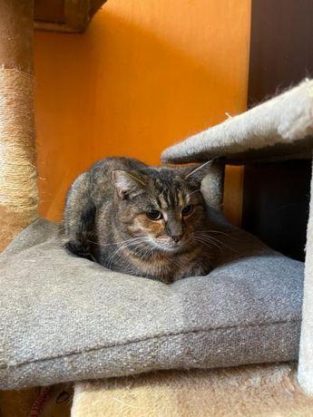 Koteczka z elementami rudego Liza kot kotka adopcja