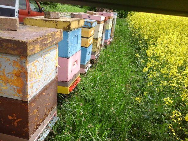 Sprzedam pszczoły,ule,przezimowane rodziny pszczele,miód, pyłek,