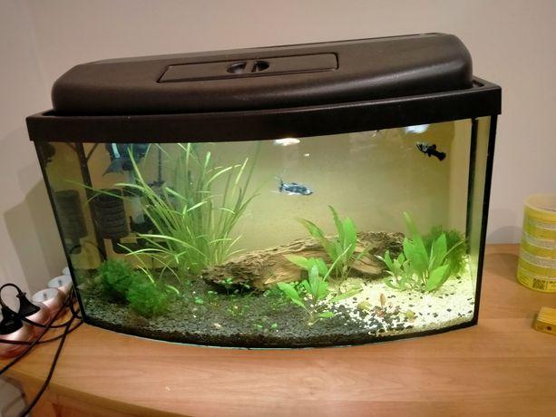 Akwarium profilowane 54l