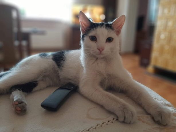Kotek Puszek Gaduła
