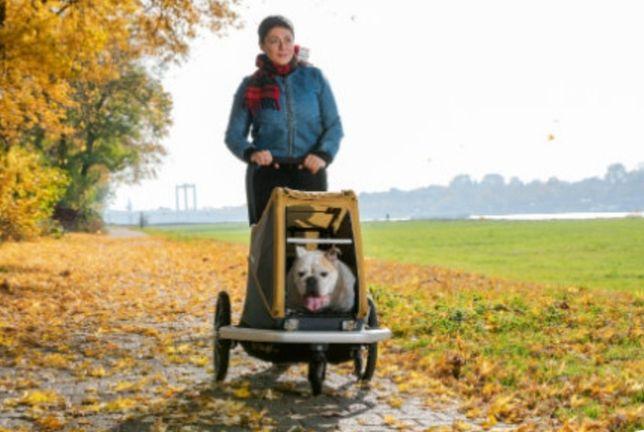 Croozer Dog Peppa przyczepka rowerowa dla psa Pineapple yellow