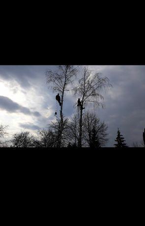 Арборист Зрізання аварійних дерев Удаление аварийных диревьев