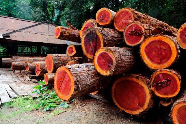 Спилить дерево, выкопать пень, уборка, копка, ямы, огороды, траншеи!