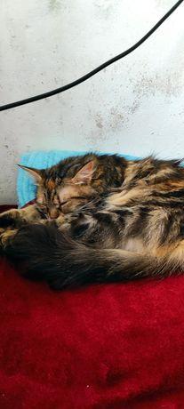 Найдена кошка, кошка ищет дом
