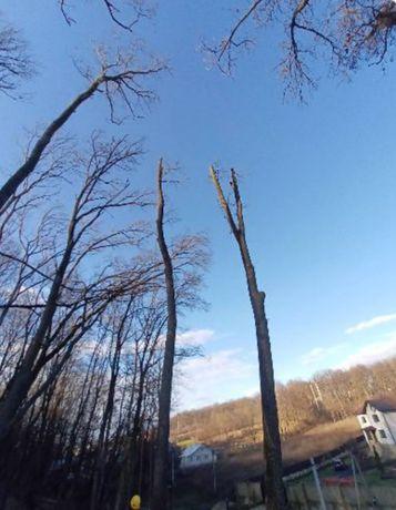 Зрідка та коронування дерев. Також надаємо послуги висотніх робіт.
